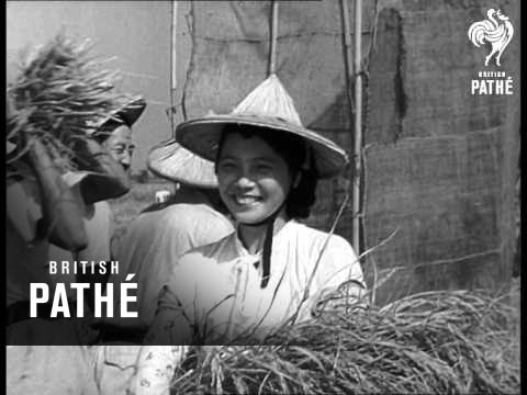 Record Rice Crop From Free China  (1958)