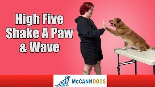 Teach Your Dog How To High Five, Shake A Paw, And How To Wave