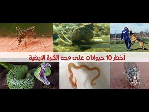 أخطر 10 حيوانات في العالم المملكة العربية السعودية Vizionlv