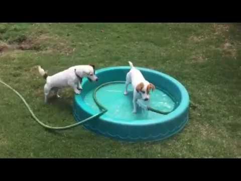 Twinkie Keeps cool ,water dogs