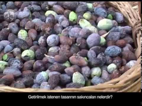Zeytinliklerin ölüm fermanına hayır! #ZeytinHayattır