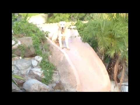 FUNNY! Dog falls into swimming pool
