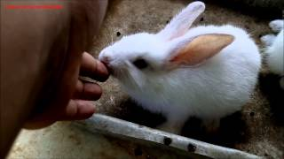 Cute Little Bunny Licking And Biting On My Fingers