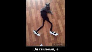 СМЕШНОЕ ВИДЕО ВПУСТИ КОТА  СМОТРЕТЬ ВСЕМ!!!! FUNNY CAT