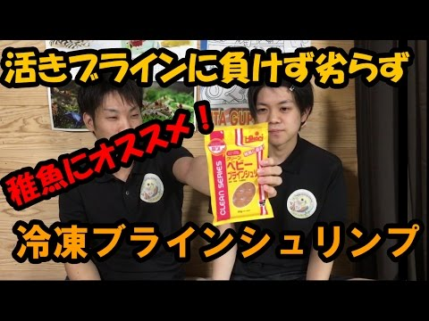 ★商品レビュー★クリーンベビーブラインシュリンプ 【大分グッピーFC】