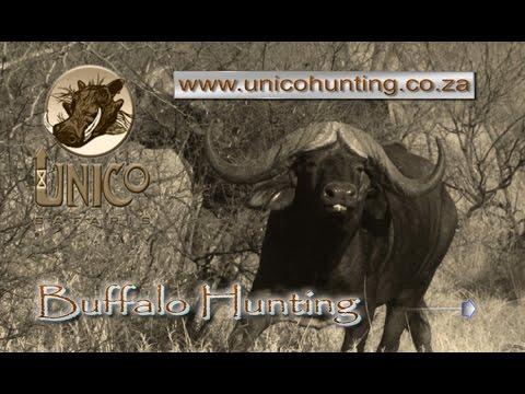 Buffalo Hunting - Unico Safaris 2017