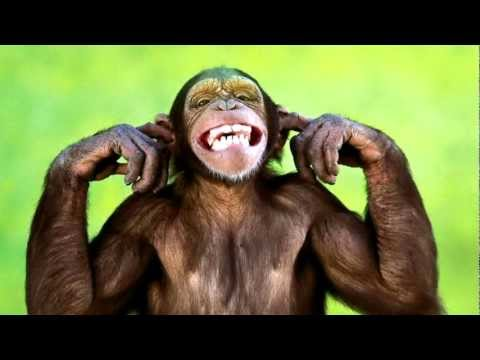 Monkey Sounds  and Monkey Pictures