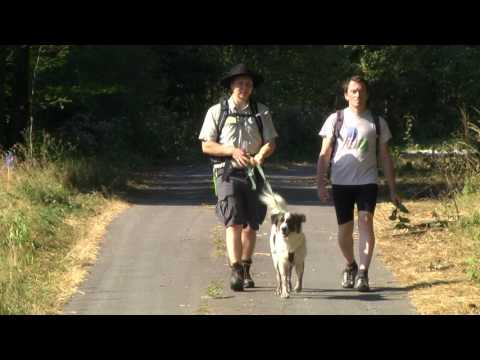 Bloggerwandern 2019: Herbstfreuden im Nationalpark Hunsrück-Hochwald