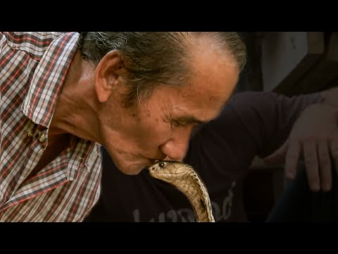 Dangerous Monocled Cobra | Deadly 60 | Series 2 | BBC