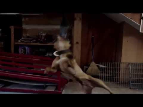 DEAD GAME!!! (ORIGINAL VIDEO) |