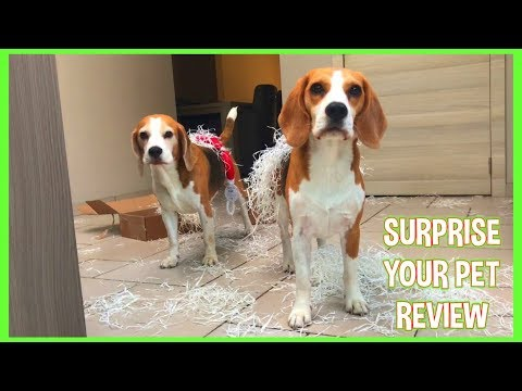 Unboxing 'Surprise Your Pet' Monthly Subscription Doggy Box