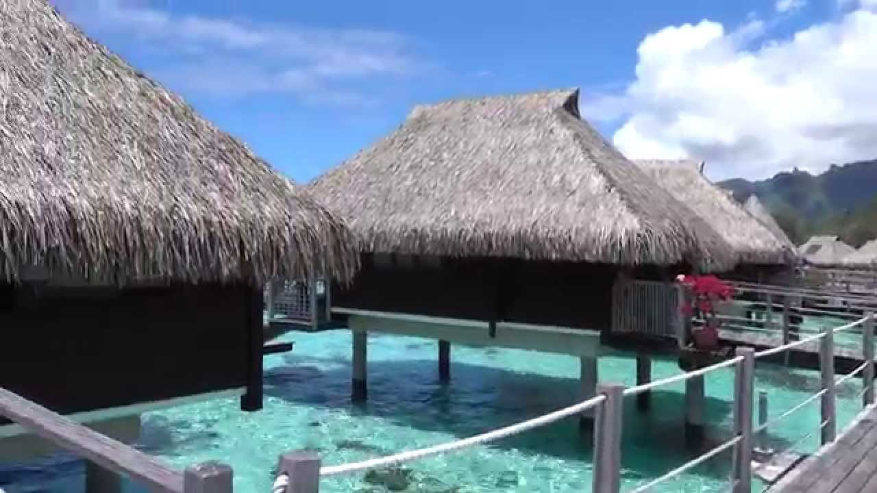 Hilton moorea king overwater bungalow 4k video youtube for Garden pool bungalow intercontinental moorea