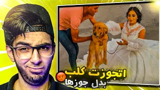 ضل كلب ولا ضل عبد الرحمن مبروك ... هبه بتخون جوزها مع كلب !!
