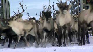 Finland: Lapland / Finnland: Lappland by Reisefernsehen.com - Reisevideo / travel video