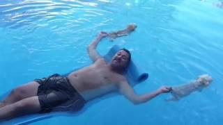 Приколы с смешными собаками в бассейне. Лучшие приколы с собаками которые плавают в бассейне.(Приколы с смешными собаками в бассейне. Лучшие приколы с собаками которые плавают в бассейне. В жизни слишк..., 2015-10-09T08:46:40.000Z)