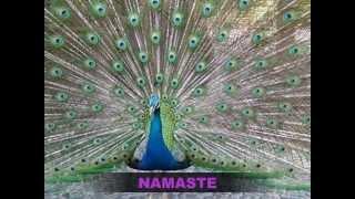 Prajna Paramita Citta Sutra ( Heart Sutra ).wmv