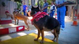 Canine Circus School: Trick Dog Training Classes In The Bay Area