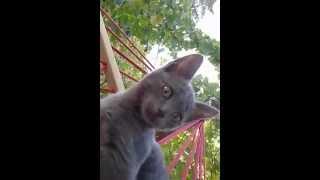 Катаюсь с котом в гамаке!!!!