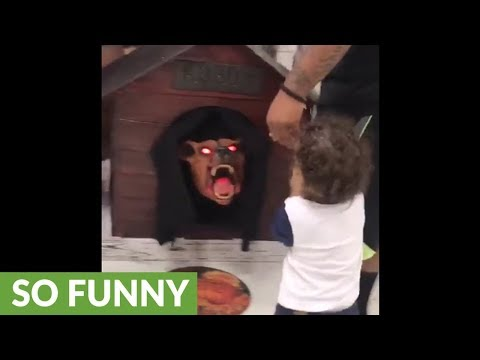 Delana's Dish - Kid beats up a halloween decoration that scared him.