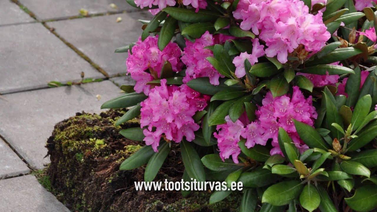 Turbaaed - Peat garden