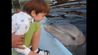 КУБА CUBA Варадеро Дельфины