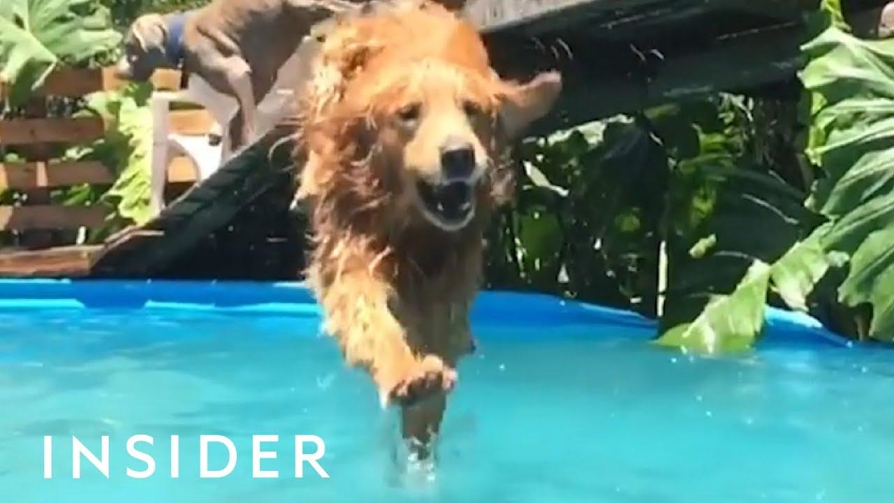 Ресорт за кучиња во Аргентина кој секој љубител на животни би сакал да го посети