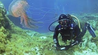 Jellyfish Of Cirkewwa - Malta