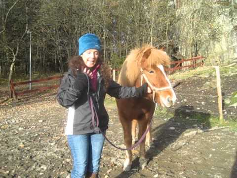 Gloria Hester Teaches Somatic Yoga for Equines in Oslo ...