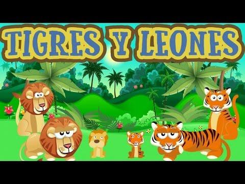 Torrebruno Tigres Tigres Leones Leones Canción Infantil En Dibujos
