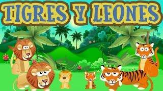 """Torrebruno - """"Tigres, tigres, leones, leones""""  (Canción infantil en dibujos)"""