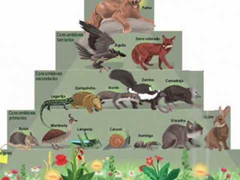 Estructura Ecosistemas