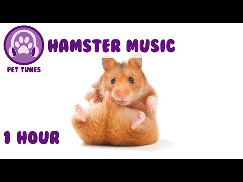 1 Hour of Relaxing Music for Your Pet Hamster