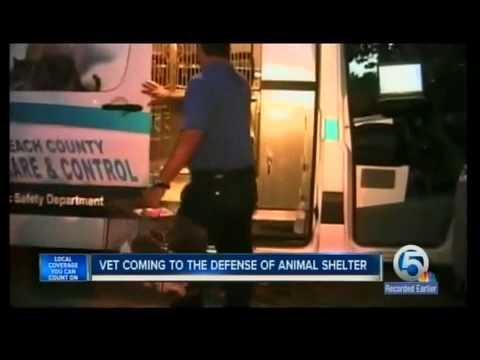 Veterinarian defends SAD-SAC shelter - YouTube - sac shelter
