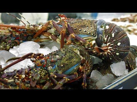 SHARJAH    FISH    MARKET   NEW 2018 - UAE