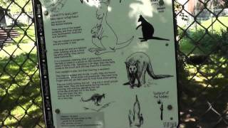 Wallaby information