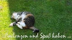 Endlich Freitag    -    Grüße und Wünsche zum Wochenende mit tierischer Unterstützung