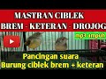 Viral Masteran Ciblek Bren Keteran Ciblek Gunung Keteranciblek Bren  Mp3 - Mp4 Download