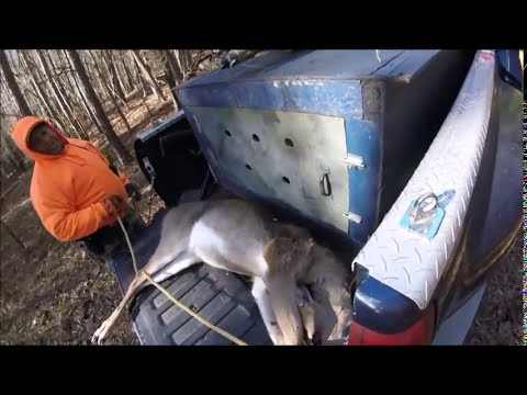 Deer hunting with dogs ( Catfish got flagged ) Edit and repost