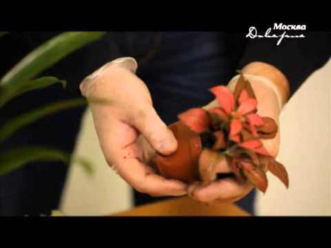 Настенные сады FLANDRISS