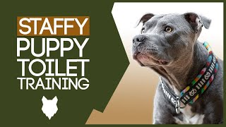 Staffordshire Bull Terrier Potty Training! HOW TO TOILET TRAIN YOUR STAFFY PUPPY!
