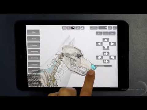 3D Dog Anatomy - Apps on Google Play
