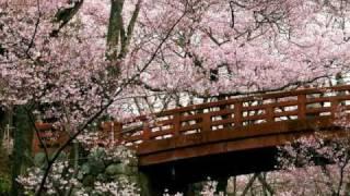 Sakurairo Maukoro - Mika Nakashima  桜色舞うころ - 中島美嘉