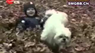 Смешное с участием животных