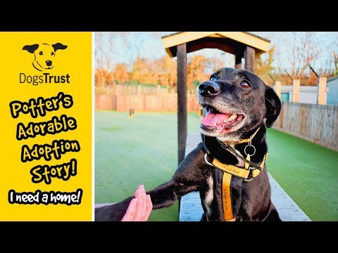 Potter's Adorable Adoption Story!   Dogs Trust Glasgow