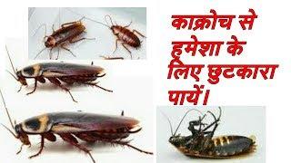 काक्रोच से हमेशा के लिए छुटकारा पाने का सटीक उपाय ||How to get rid of cockroaches||||HINDI