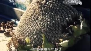 20140609 讲述 长白山参客 thumbnail