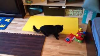 Коврик-пазл алфавит и мягкий пол для детской. Видео обзор