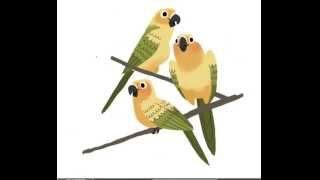 Beautiful Birds | Digital Illustration in Photoshop