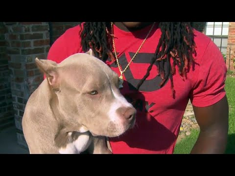 lucky whitehead dog