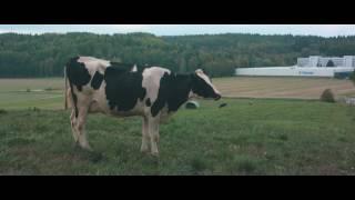 Talking Cow/LRF Mjölk